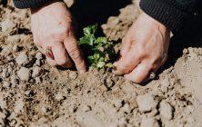 Tuin laten aanleggen of zelf doen? De voor- en nadelen op een rij